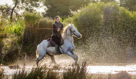 Rider on the White Camargue horse. Royalty Free Stock Photography