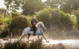 Rider on the White Camargue horse. Royalty Free Stock Photo