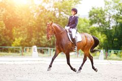 Rider woman on bay horse in dressage competition. Young rider woman on her bay horse on advanced test dressage competition at sunny day Stock Images