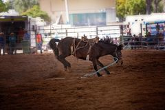 Bucking Rodeo Horse. Riderless bucking bronco horse at indoor country rodeo Royalty Free Stock Images