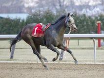 Riderlesspaard Gnarly royalty-vrije stock afbeeldingen