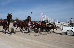 Horse harness race start wide. Riders compete during a horse harness race in Palma de Mallorca´s hippodrome Stock Image