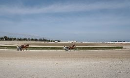 Horse harness race start wide view. Riders compete during a horse harness race in Palma de Mallorca´s hippodrome Stock Photography