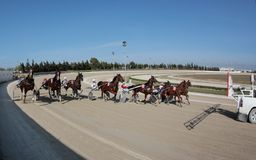 Horse harness race starting wide. Riders compete during a horse harness race or sulky racing in Palma de Mallorca´s hippodrome Royalty Free Stock Photography