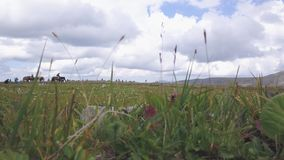 Riders on horseback. Clip. Summer pastures in an intermontane valley. People on horseback in green meadow stock video footage
