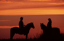 Riders on horses Stock Photography