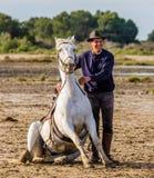 Riders near his White Camargue horse. Stock Photo
