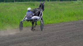 Riders are preparing for competition on horseback trotters. Riders control the movement of horses harnessed to sports strollers. H. Orses run trot. Sunny summer stock footage