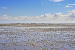 Riders in wadden sea at low tide Royalty Free Stock Images