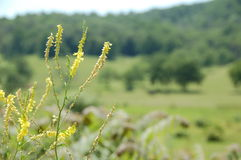 Ridge Appalachia blu immagini stock libere da diritti