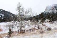 Ridge Coated aterronado en nieve foto de archivo libre de regalías
