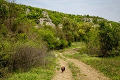 Ridge de  voisin е, Bulgarie des roches Ð ÑƒÑ photos stock