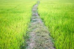 Ridge de la vida del granjero Imagen de archivo libre de regalías