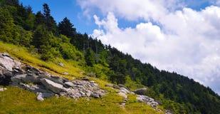 Ridge dei pini Fotografie Stock