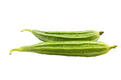 Ridge gourd Royalty Free Stock Images