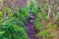 Ridge gramíneo, rododendro do Catawba, Roan Mountain State Park fotografia de stock