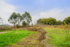 Ridge between grassy fields in sunny spring afternoon Royalty Free Stock Photos