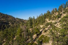 Ridge of Green Pine Trees. Diagonalline of green pine trees crown a mountain ridge in the San Gabriels of Southern California Stock Photography
