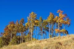 Ridge mit Bäumen lizenzfreie stockfotos