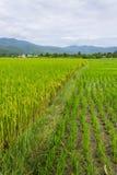 Ridge, mountain and rice field in Thailand Stock Photos