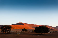 Ridge of Namibian desert dunes rise beyond trees in oasis Stock Photos