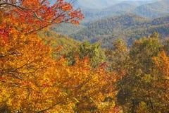 Ridge Parkway Autumn Colors In azul Carolina del Norte Imagen de archivo libre de regalías