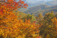 Ridge Parkway Autumn Colors In azul North Carolina Imagem de Stock Royalty Free