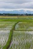 Ridge And Rice-Feld in Chiangmai, Nord-Thailand Stockbilder