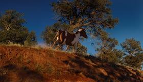 Ridge Runner Royalty Free Stock Images