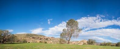 Ridge Single Tree verde Imágenes de archivo libres de regalías