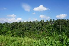 Jungle view Rice field Bali with clouds and palm trees Royalty Free Stock Photography