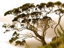 Ridge Tree Royalty Free Stock Photo