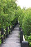 Ridge walkway in Mangrove forest Royalty Free Stock Photography