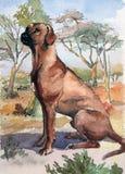 Ridgeback psa traken Akwarela oryginału ilustracja Ręki rysunkowa sztuka Akwareli pojęcie Zwierzęcy pojęcie royalty ilustracja
