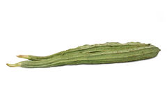 Ridged gourd luffa acutangula oyong Stock Photos