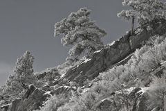 Ridgeline view. Trees above a small ledge of rocks greet the sun as it sheds warmth over the valley, photo shot as B&W Royalty Free Stock Photo