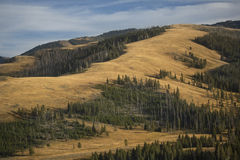 Ridges and yellow plains near Mt. Washburn in Yellowstone, Wyomi Royalty Free Stock Images