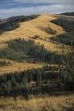 Ridges and yellow plains near Mt. Washburn in Yellowstone, Wyomi Royalty Free Stock Photo