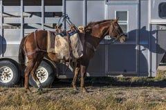 Ridgway, Col orado: Лошадь около трейлера в горах Сан-Хуана, Co стоковые фото