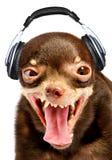 Ridiculous dog DJ. stock photos