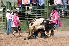 riding быка Стоковые Изображения RF