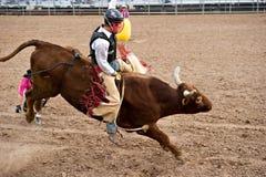 riding быка Стоковые Фотографии RF