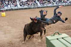 riding быка Стоковое Изображение RF