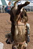 riding быка Стоковые Фото