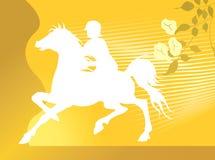 riding лошади Стоковые Изображения