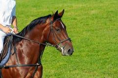 riding человека лошади Стоковая Фотография