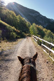 Riding. A horse in a sunny morning Royalty Free Stock Photo