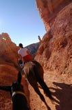 Riding. Horseback riding Royalty Free Stock Photo