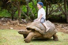 гигантская черепаха riding Стоковые Фотографии RF