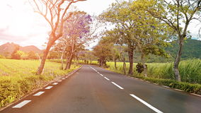 Riding along a road with flowering trees stock footage